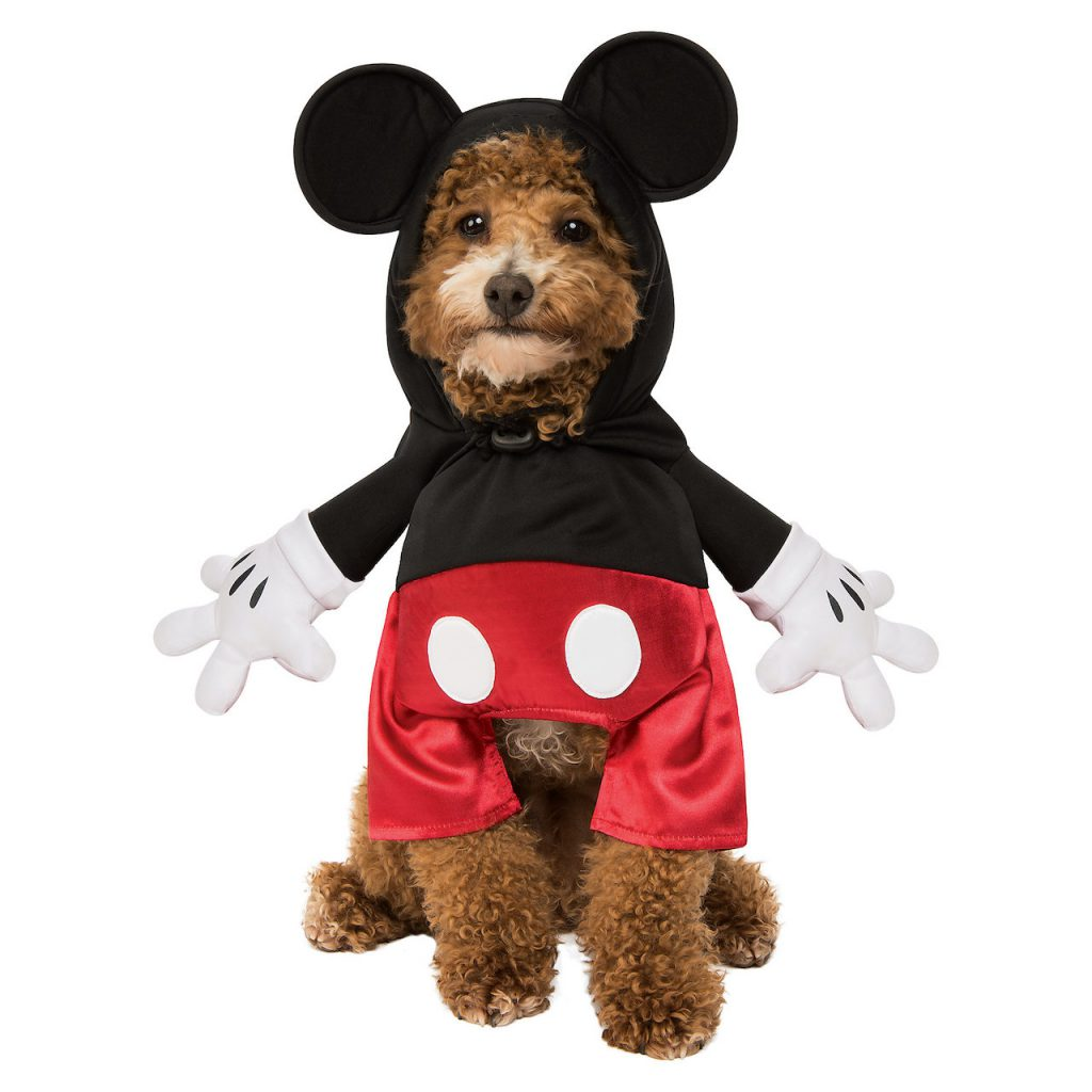Dog in a Mickey Mouse halloween costume