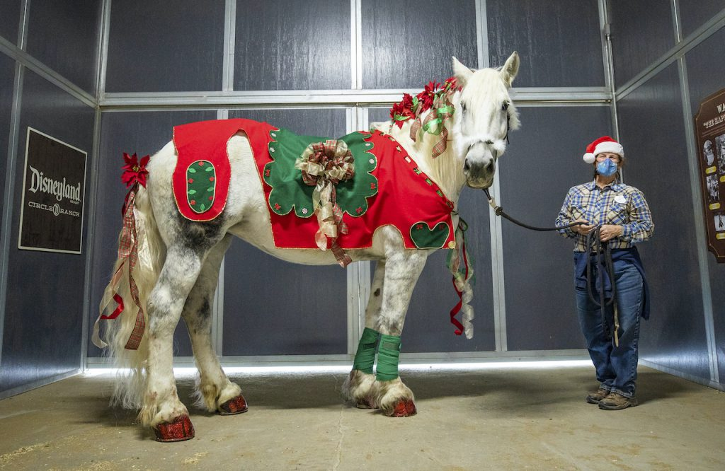 Val, a Percheron Draft Horse, is dressed to deck the halls and spread good cheer